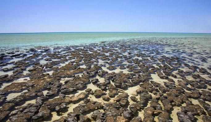 Grönland'da 3,6 milyar yıllık fosil bulundu