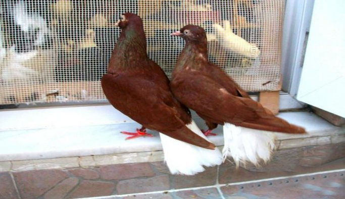 Güvercinlere 3+1 yuva