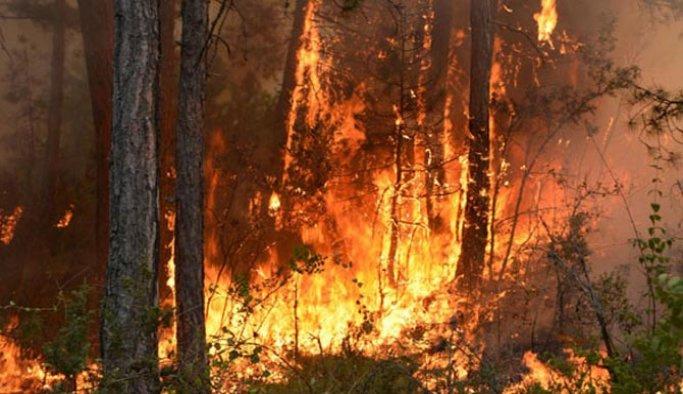 İspanya'da orman yangını