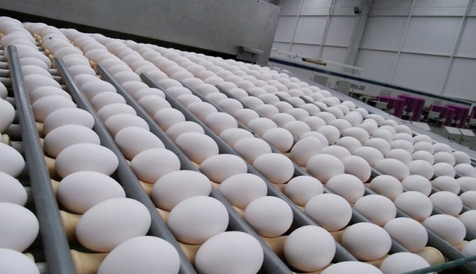 Yumurta fiyatları yeniden yükselişte