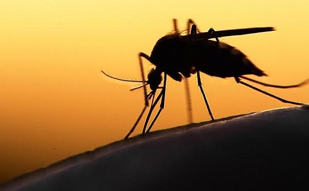 Zika virüsü hakkında bilinmesi gerekenler - VİDEO
