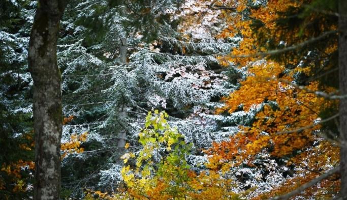 Sonbahar ve kış manzarası bir arada