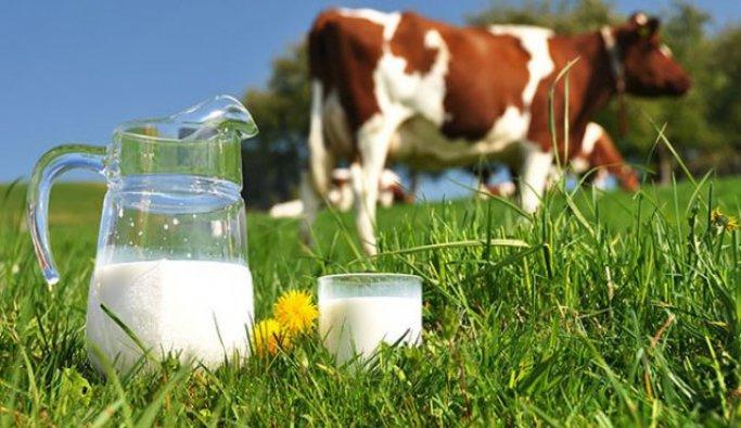 Toplanan inek sütü miktarı eylülde artış göstersi