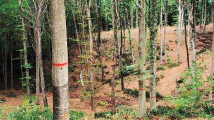 Belgrad ormanlarındaki işaretlerin sırrı çözüldü