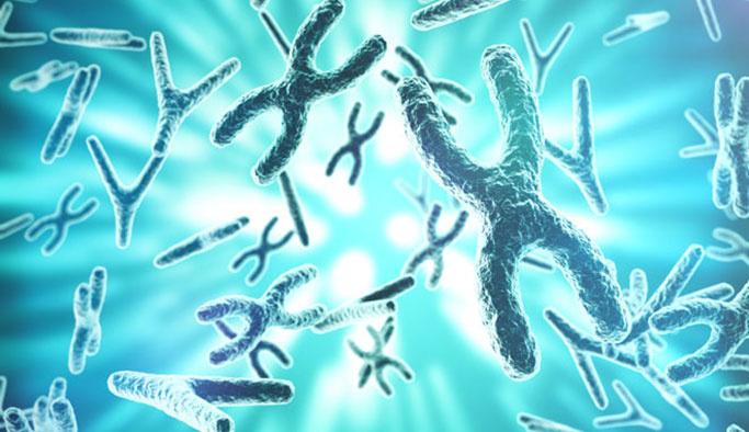 Bilim adamları 'yarı-sentetik' organizma geliştirdi