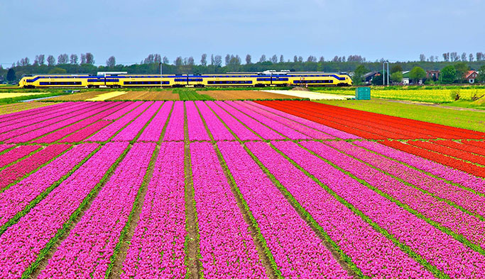 Hollanda'da trenler sadece rüzgarla çalışıyor