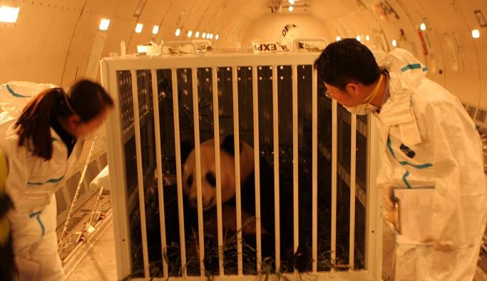 Panda Bao Bao gözyaşları içinde uğurlandı