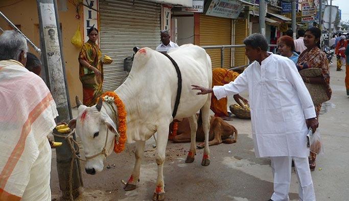 Sürüsünde inek bulunan Müslüman aileye Hindu saldırısı