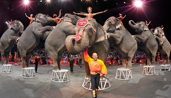 146 yıldır hayvanlara işkence yapılan sirk kapandı