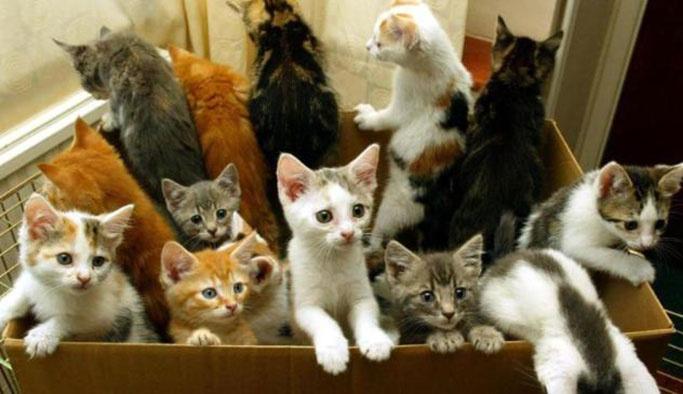 Brüksel'de kedileri kısırlaştırma kararı