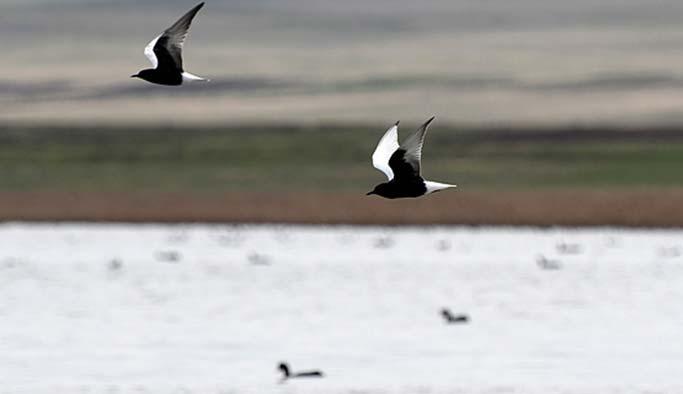 Doğu'nun kuş cenetti Kuyucuk Gölü