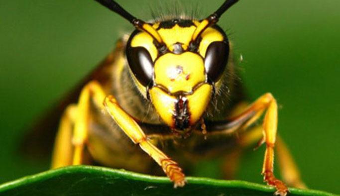 Arılar bir haftada 3 kişiyi öldürdü