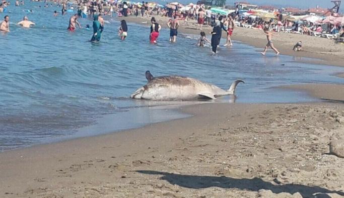 Ölü yunus balığı karaya vurdu