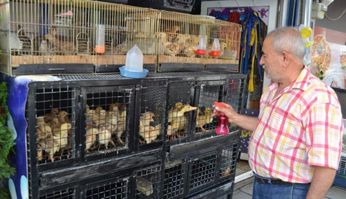 Pet Shop'larda hayvan satışı yasaklandı