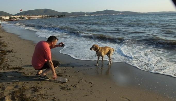 Plajdaki köpek tatilcilerin maskotu oldu