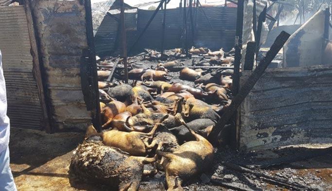 Antalya'daki yangında yürek burkan görüntüler