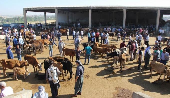 Diyarbakır Hayvan Borsasında durgunluk