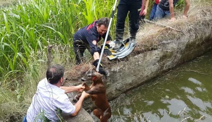 Su kuyusuna düşen karaca itfaiye ekipleri tarafından kurtarıldı