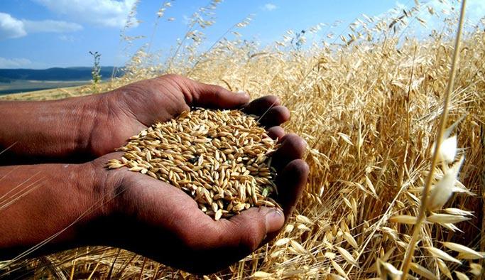 Türkiye'de her yıl Somali'yi doyurabilecek kadar buğday israf ediliyor
