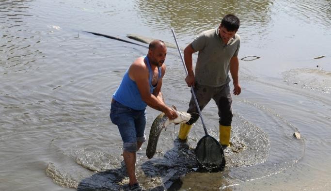 Edirne'de yenilenen gölette balık sürprizi