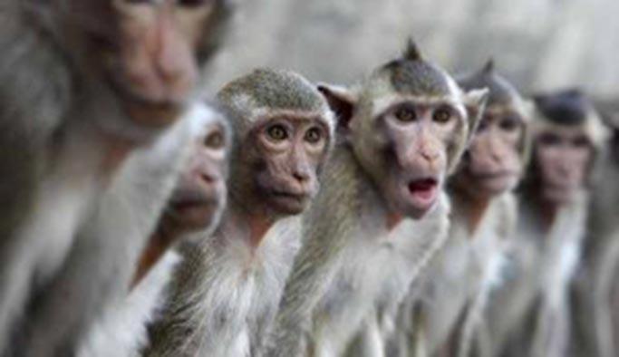 İstilacı maymunlara karşı ordu harekete geçti
