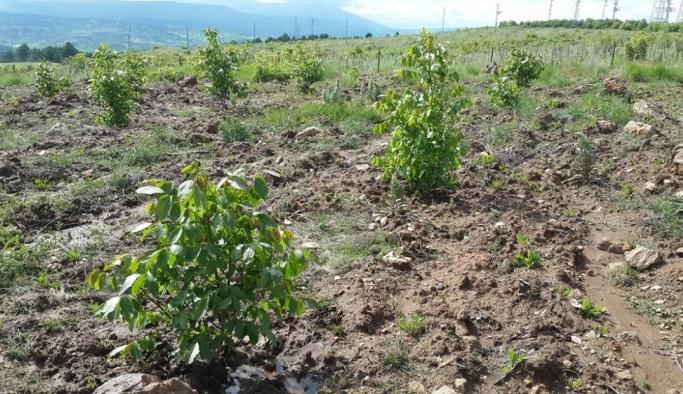Kütahya'da '5 bin köye 5 bin gelir getirici orman' projesi