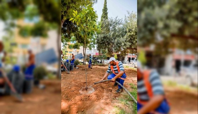 Muratpaşa 'Turunç Çiçeği' kokacak