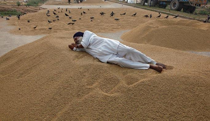 Sıcaklık arttıkça Hindistanlı çiftçiler intihar ediyor