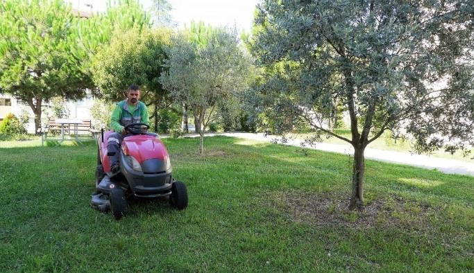 Başiskele'de her gün 60  dönüm çim biçiliyor