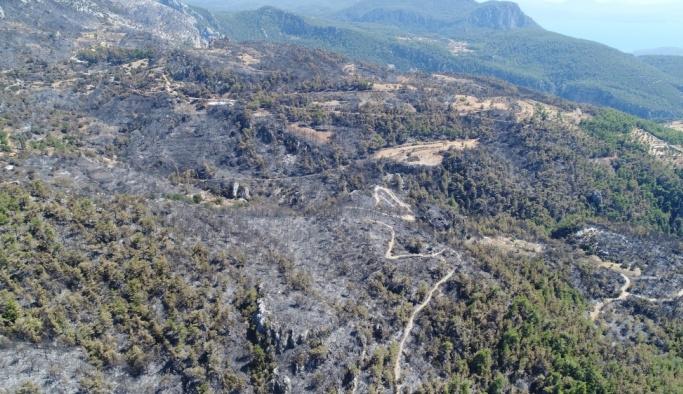 Muğla'daki orman yangını