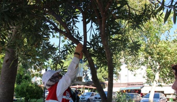 Öğrenciler kuşlar için ağaçlara yemlik astı