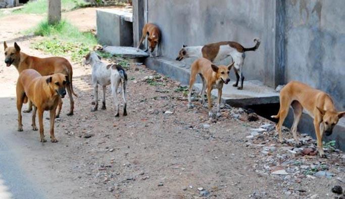 Sokak köpekleri Oxford profesörünü yedi