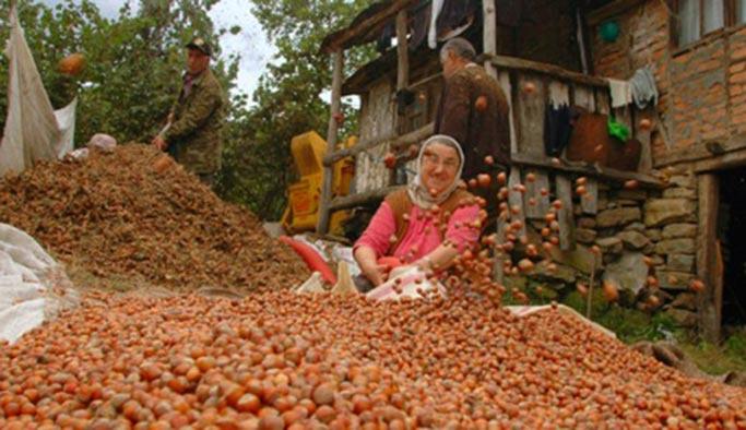 Türkiye'de 400 bin aile fındıktan geçiniyor
