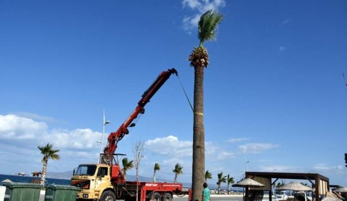 Aliağa'nın dev sembol palmiyeleri Ağapark'ta hayat buldu