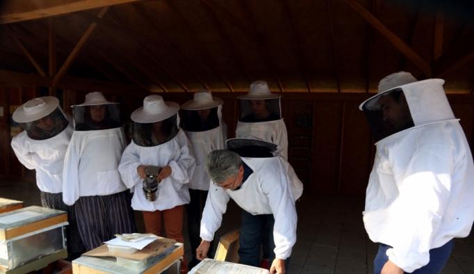 Balın kalitesi, eğitimli arıcılarla artacak