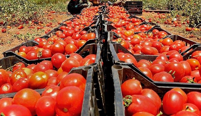 Rusya, domatesle tehdit etmeye başladı