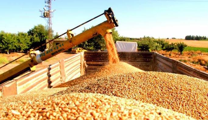 Türkiye'nin buğday kararı Rusya'yı şaşırttı