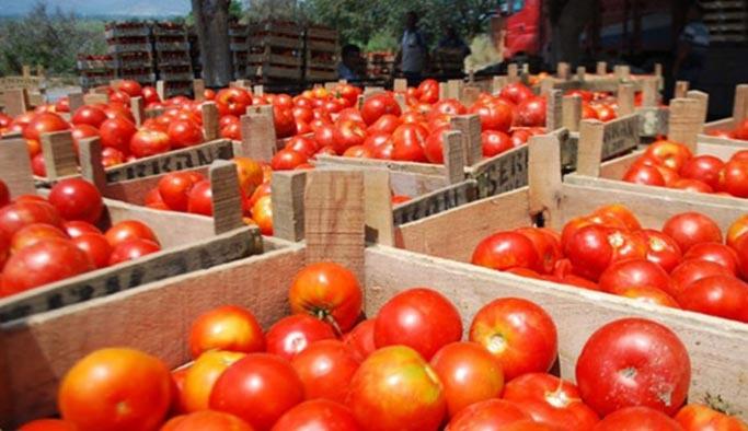 Rusya'ya domates ihracatı üretici ve ihracatçıyı sevindirdi