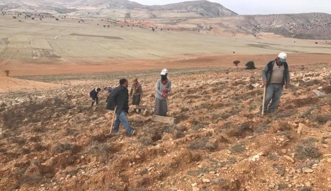 300 bin fidan toprakla buluşuyor