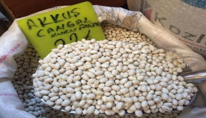 Akkuş fasulyesinin üretimi artacak