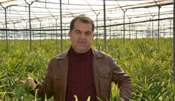 Antalya'da ilk kez üretilen zencefilde hasad dönemi