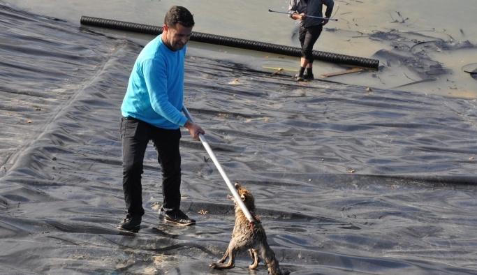 Bursa'da tilki kurtarma operasyonu
