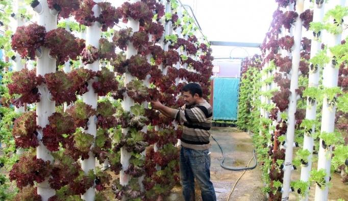 Dikey topraksız tarım ile 9 dönem ürün alıyor