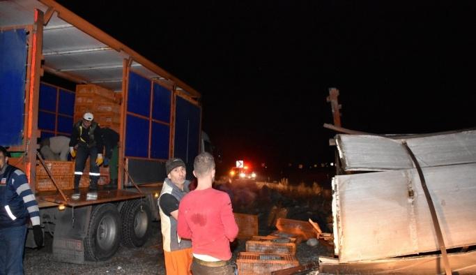 (Özel Haber) Tavuk yüklü kamyon devrildi, hayvanlar telef oldu