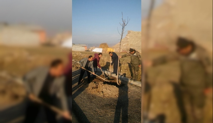 Tuzluca'da fidan dikimi devam ediyor
