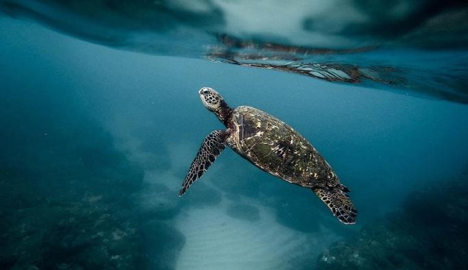 Kaplumbağa yiyen 8 çocuk öldü