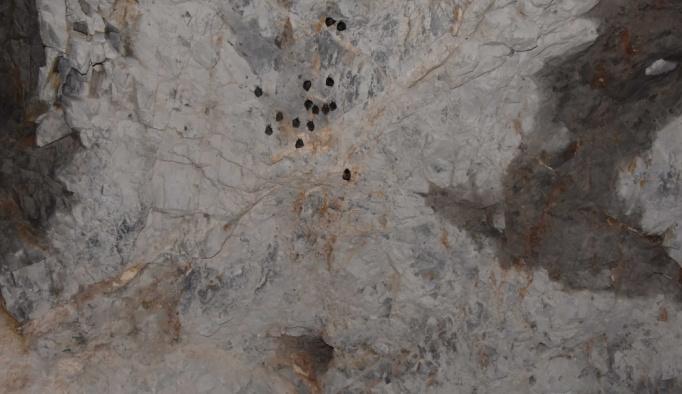 Havran'daki suni mağara yarasaların yuvası oldu