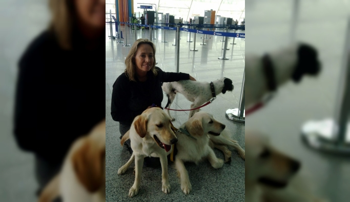 Sokak köpekleriyle ülkelerine gittiler