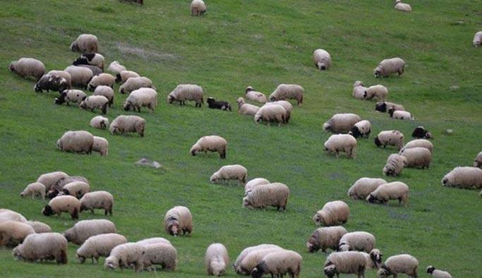 300 koyun projesine BM'den destek sinyali