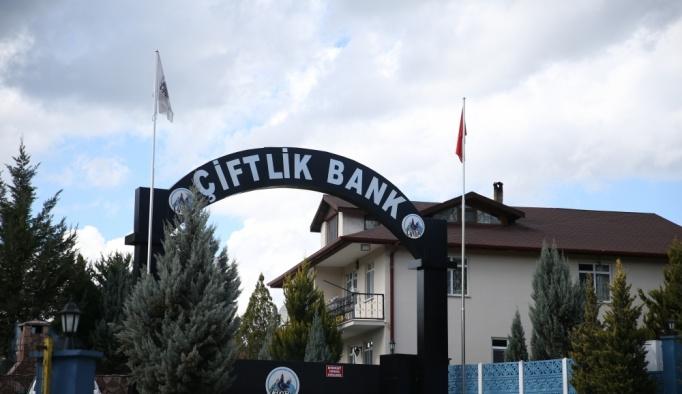 Çiftlik Bank sahibinin eşi tutuklandı